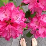 花とワラーチ