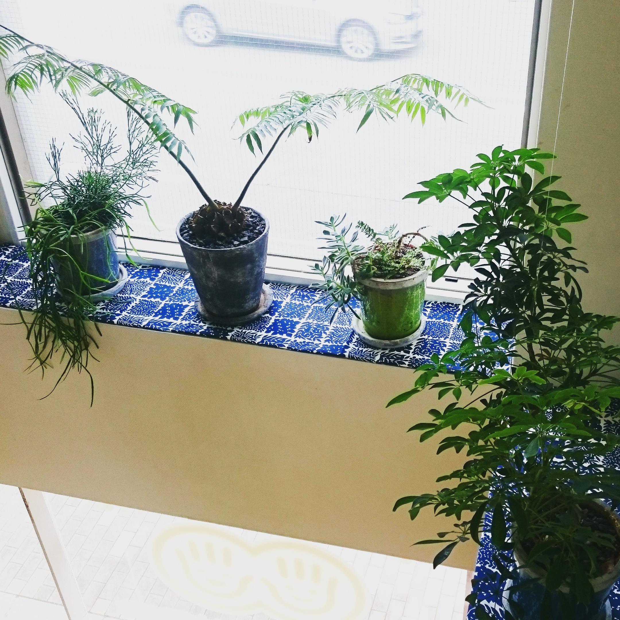 やまさきの観葉植物