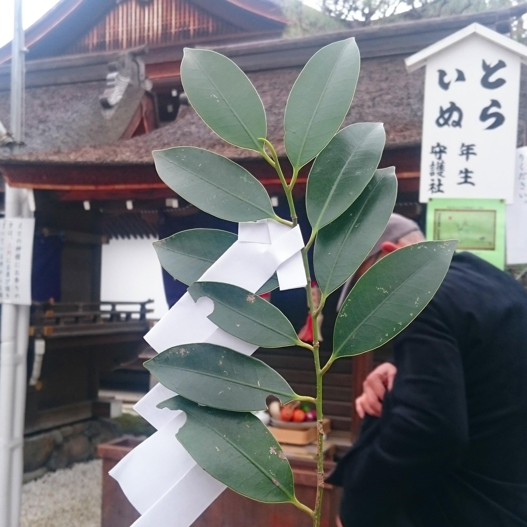 新春 京都寺社巡り