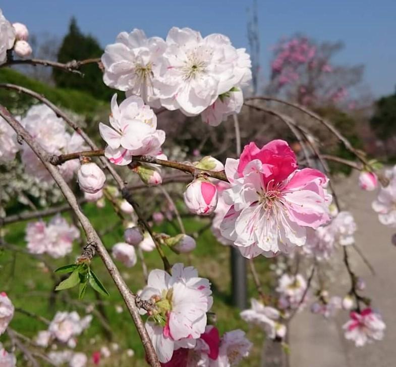 快適な春を過ごす方法